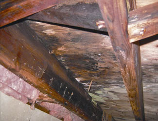 mold and rot in a Newark crawl space