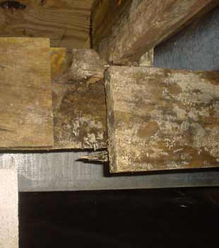 Extensive basement rot found in Reading by Philadelphia Basement Systems