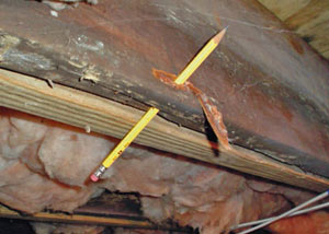Destroyed crawl space structural wood in Philadelphia
