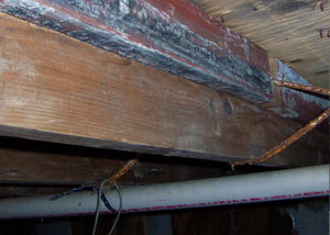 Rotting, decaying wood from mold damage in Cherry Hill